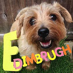 Edimbrugh Fringe Dog