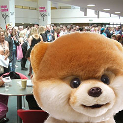 Woof! I Met the Media!